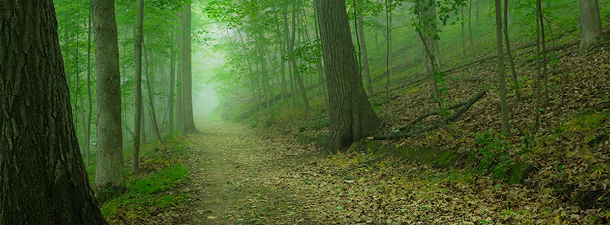 Soulful Path - re-enchant your life